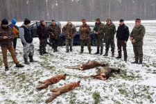 zolomza-2016-polowanie-wigilijne-lis-bialystok-003