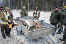 zolomza-md-2016-01-16--polowanie-orl-w-rajgrodzie-099