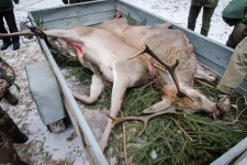 zolomza-md-2016-01-16--polowanie-orl-w-rajgrodzie-108