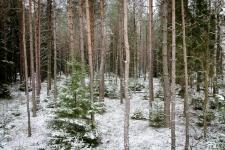 zolomza-md-2016-01-16--polowanie-orl-w-rajgrodzie-135