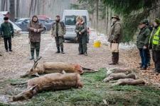 zolomza-md-2016-01-16--polowanie-orl-w-rajgrodzie-230
