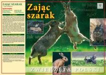 Zwierzeta_Polski_PZL.indd