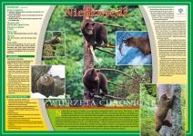 Zwierzęta chronione - Niedźwiedź